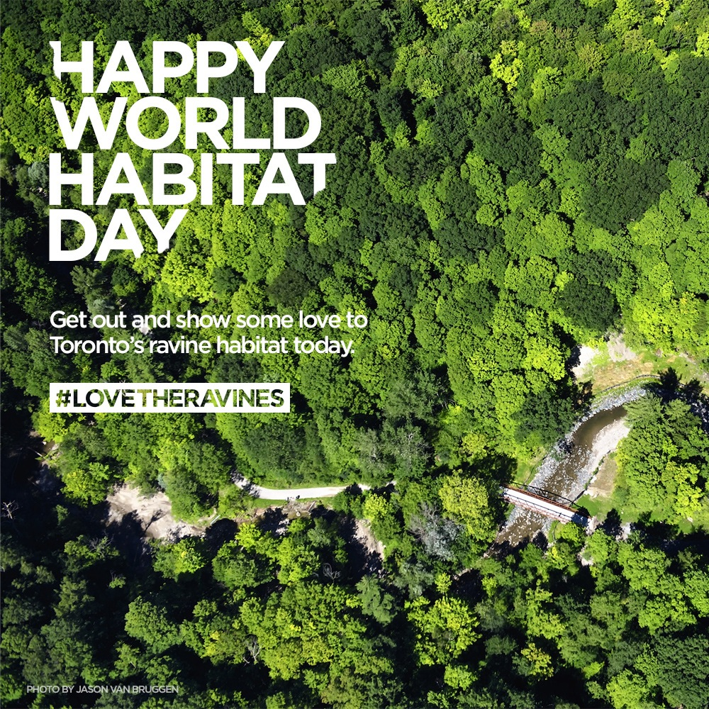 Habitat Day copy 2.jpg