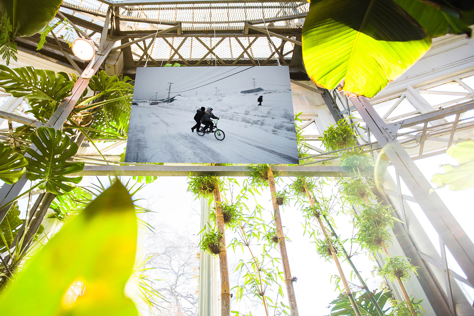 JasonvanBruggen.Ice-In-The-Palm-House-19